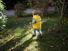 Automne (Dahrth) Tags: gf1 gf120 panasoniclumixgf1 lumixmicroquatretiers lumixμ43 micro43 microfourthirds raw bébé baby yellow doudoune dawn jardin garden fall autumn feuillesmortes deadleaves lumière light