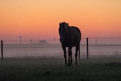 Misty morning (Infomastern) Tags: sdersltt animal countryside dawn dimma djur fog gryning horse hst landsbygd landscape landskap mist soluppgng sunrise exif:model=canoneos760d exif:focallength=170mm camera:make=canon geocity camera:model=canoneos760d geocountry geostate geolocation exif:lens=efs18200mmf3556is exif:isospeed=6400 exif:aperture=56 exif:make=canon