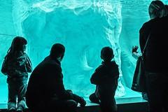 Family - Famiglia (vacondioalice) Tags: famiglia family love acquarium water portrait art blu photo photography child