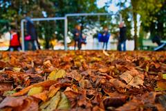 Feuilles d'automne (vander84) Tags: feuille leaf automne autumn color colorful