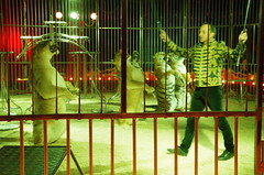 IMGP4804 (kanakacatherineb) Tags: cirque venise narbonne landri 2016 lions chameaux chiens dompteurs jongleur gymnaste