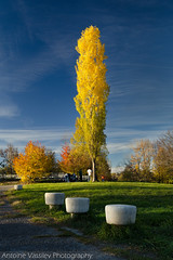 / Sunny fall (AVasilev) Tags: autumn tree sunny fall colors poplar park sky sofia           south