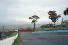 Bathurst NSW, 2016 (jamiehladky) Tags: bathurst nsw australia circuit v8 race racetrack jamiehladky film portra portra400 mediumformat 6x9 fuji6x9 landscape tree 120 gw690 gw690iii eucalypt eucalyptus