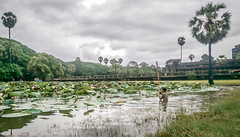 Boy plays in Ancient Pond (sachasplasher) Tags: temple ancient cambodia cambodian jungle child children play water pong sky ruin pond lily clouds grey reflection stick old