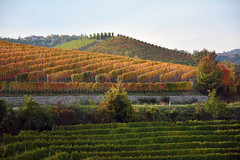 I colori delle Langhe -  The colors of the Langhe. (sinetempore) Tags: icoloridellelanghe thecolorsofthelanghe barolo vigneti vineyards autunno autumn uva vino wine langhe