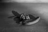 Feed (Alejandro Ortiz III) Tags: 6d alejandroortiziii alex alexortiz allrightsreserved brooklyn canon canoneos copyright2016 copyright©2016alejandroortiziii digital eos halloween halloween2016 lightroom lightroom3 newjersey newyork newyorkcity rahway shbnggrth alexortizphotogmailcom copyrightâ©2016alejandroortiziii â©2016