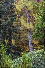 Colours (Jistfoties) Tags: dawyckgardens autumn scottishborders botanicgardens landscape canon5d canon24105f4