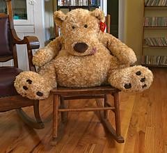 Cousin's Bear (BKHagar *Kim*) Tags: bkhgar bear teddybear cousins notmine big htbt