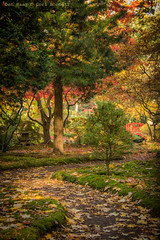 The little red bridge (farflungistan) Tags: canon7d fall2016 fallfoliage haagsebos thehague denhaag bos forest landscape nature nederland netherlands japanesegarden japansetuin