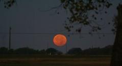 DSC00472 (carrie_20001jf) Tags: supermoon moon morning night astronomy texas sky texassky supermoon2016 2016 skyporn nature texasnature