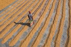 Working man of rice mill (Zakir Hossain Sohel) Tags: ricemill paddydryer paddy bangladeshiworker indianworker peopleineconomy people poorpeople rice beautifulbangladesh goodframe nicecomposition bestcomposition desipeople yard