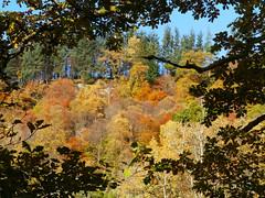 Callander Crags (Niall Corbet) Tags: scotland perthshire callandercrags callander autumn woodland forest oak light shadow