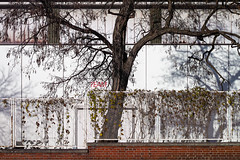 . (leopanta*) Tags: 2016 berlin sigmadp leopanta tree autumn westhafen