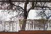 . (leopanta*) Tags: 2016 berlin leopanta tree autumn westhafen sigma sigmadp2