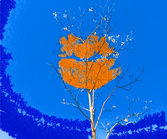 I love flowers! (denise.bardauil) Tags: lips flower tree vividcolors digitalart plant nikon