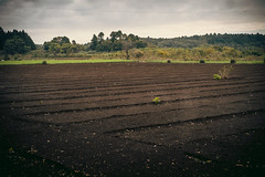 DSCF3403.jpg (drufisher) Tags: morning soil fertile farm farmland countryside tomisatoshi chibaken japan jp