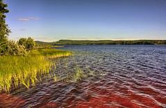 IMG_8003 tonemapped-1 (Andre56154) Tags: schweden sweden sverige see lake wasser water ufer schilf reed himmel sky