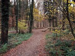 Bruchsaler Hgelland im November (infactoweb) Tags: bruchsal obergrombach eichelberg kraichgau hgel hgelland wandern infactoweb