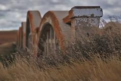under the golden arches (RhinoSkin) Tags: spans concrete bridge grass