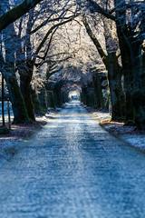 Sun flares (Fotos aus OWL) Tags: kalt reif sonnenstrahlen allee strase landschaft senne winter