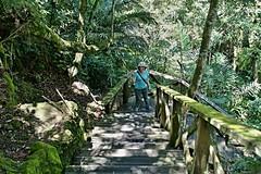 DSC02248 (Alan A. Lew) Tags: ruili taiwan alishan 2015