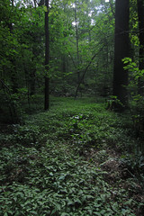 evening forest (Molly Des Jardin) Tags: park trees light sky usa green leaves forest evening afternoon floor state bright pennsylvania branches trunks 2014 undergrowth susquehannock drumore 43215mm