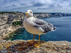 If you were the only gull in the world and I were the only buoy... (Dale Michelsohn) Tags: ocean leica blue sea italy fish bird art beach photoshop french island coast town wings rocks paint dale seagull gull corsica beak feather seaview dalem dlux4 dalemichelsohn