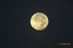 August 30, 2015 - A setting full moon. (Ed Dalton)