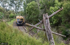 Relic (Dobpics O'Brien) Tags: victorian rail railway healesville victoria railcar walker valley yarra yvr railways vr railmotor 22rm