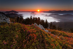 Flor de Brezo (Alfredo.Ruiz) Tags: sun flower sol sunrise canon flor amanecer alava niebla ef1740 brezo aramaiona eos6d alavavision