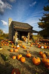 Peach Tree Farms (Notley) Tags: fall rural pumpkin cabin october pumpkins harvest logcabin missouri i70 overton 2015 10thavenue notley ruralphotography overtonmissouri notleyhawkins coopercountymissouri missouriphotography peachtreefarms httpwwwnotleyhawkinscom notleyhawkinsphotography