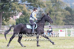 163L_0033 (Lukas Krajicek) Tags: military czechrepublic cz kon koně vysočina vysoina southbohemianregion blažejov dvoreček všestrannost dvoreek