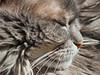 IMG_5726_DxO (d_fust) Tags: cat kitten gato katze 猫 macska gatto fust kedi 貓 anak katt gatito kissa kätzchen gattino kucing 小貓 고양이 katje кот γάτα γατάκι แมว yavrusu 仔猫 का बिल्ली बच्चा