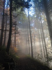 Misty trails in the Black Forest (black_betty2) Tags: light mist forest trails schwarzwald blackforest iphone