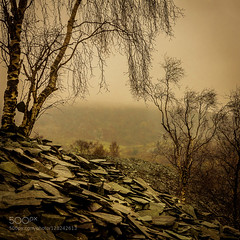 At the Slate Mine (bla_q2000) Tags: trees england lake heritage silver landscape mine industrial mood close district lakes mining cumbria birch slate hodge the 500px ifttt