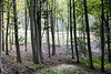 IMG_3069-Modifier (mycenium) Tags: wood mushroom canon belgium region foret brabant champignon bois 6d wallon wallonie wallone belgiquie