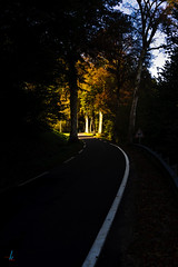 Lead into the Light (~shrewd~) Tags: herbst autumn street road trees strasse landstrasse landscape wood forest sonne sun licht light schatten shadow yellow red blueish gelb rot bläulich france frankreich blätter leave leading line begrenzung linie automne