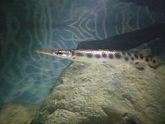IMG_20151221_155331 (Chris Demwell) Tags: sydneyaquarium