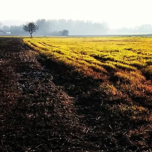 Field  #field #tree #misty #green #autumn  #landscape #Feld #Nebel Herbst #Klagenfurt #chiaroscuro #droidography #paintography