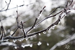 Frozen in time (crazyxavphotos) Tags: winter cold macro tree ice closeup frozen branch branches freezing frozenintime icybranches