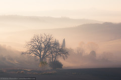 Sunrise at countryside landscape (nickolay_khoroshkov) Tags: italy sunlight tree green nature beautiful field grass fog rural sunrise landscape countryside spring italian europe outdoor farm country hill foggy meadow sunny farmland tuscany belvedere agriculture toscana orcia