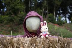 Rabbit and Scarecrow (mensore) Tags:   scarecrow   rabbit landsape satoyama