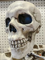 Happy Halloween! (Thad Zajdowicz) Tags: skull skeleton halloween creativecommons freeuse teeth eyes nose zajdowicz pasadena california 366 365 cellphone photoshopexpress indoor inside availablelight closeup
