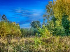 natuur -14- (Jan 1147) Tags: natuur nature green groen blue blauw sky cloud clouds wolk wolken lucht wolkenlucht wolkendek bomen trees outdoor buitenopname sintmartenslatem belgium