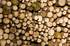 ckuchem-7140 (christine_kuchem) Tags: abholzung baum baumstmme bume einschlag fichten holzeinschlag holzwirtschaft wald waldwirtschaft