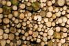 ckuchem-7140 (christine_kuchem) Tags: abholzung baum baumstämme bäume einschlag fichten holzeinschlag holzwirtschaft wald waldwirtschaft
