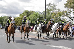 Police horses on crowd control before the match (Ian Press Photography) Tags: ipswich town football club portman road suffolk norwiich city fc 999 police emergency service services match old farm derby championship norfolk horses crowd control before horse mounted london colp