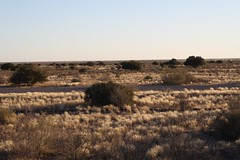 2015_Stampriet_Fieldwork-Kirstin_Fields5 (The International Groundwater Centre) Tags: groundwater governance africa southafrica botswana namibia ramotswa aquifer kirstin conti