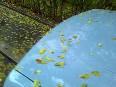 Fotografie15248colo (chicore2011) Tags: randomcolors car leaves hedges