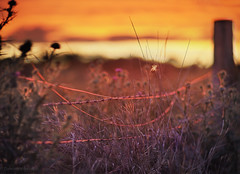 Broken fence sunset_d_c (gnarlydog) Tags: sunset rural fencepost fenceline flowers backlit bokeh doindustriesnavitar75mmf13 manualfocus shallowdepthoffield adaptedlens cmountlens